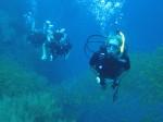 Sail Rock Scuba diving delights, 2012