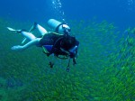 On a PADI Multilevel Dive at Sail Rock in the Gulf of Thailand