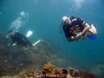 Pre-full moon diving update from Chaloklum, Koh Phangan